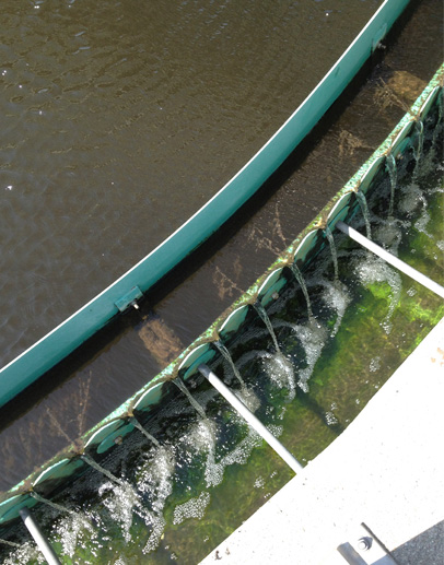 Covance-Greenfield Wastewater Pretreatment Evaluation